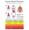 human blood pressure charts vector image vector image