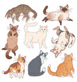 cartoon cats cute kittens different colours vector image vector image