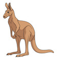 color of a red kangaroo vector image vector image