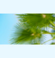 palm tree on blue sky background blurred vector image vector image