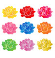 rose flower on white background vector image