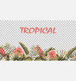 seamless tropical border transparent background vector image