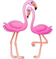 cartoon two pink flamingo on white background vector image