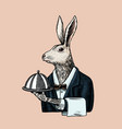 hare waiter with a dish rabbit flunky or garcon vector image