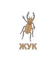 cartoon beetle flashcard for children vector image