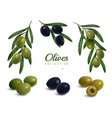 realistic olives branches set vector image