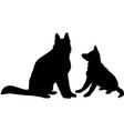 shepherd dogs vector image vector image