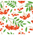 branch of ashberries isolated on white seamless vector image vector image