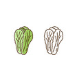 colorful and monochrome outline chinese cabbage vector image vector image