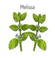 melissa hand drawn vector image vector image