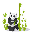 panda sitting between bamboo holds green leaves vector image vector image