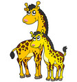 female and baby giraffes vector image