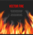 fire background light of blazing flame on vector image vector image