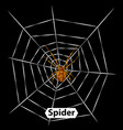 spider cobweb and isolated vector image vector image