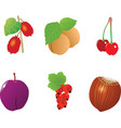 One fresh plum on the white backgroundcouple of ch vector image