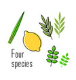 sukkot set herbs and spices etrog lulav vector image