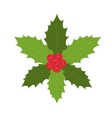 Traditional Christmas holly with red berries vector image
