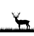 silhouette deer stag reindeer in forest grass vector image