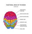 human brain concept vector image