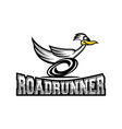 modern roadrunner bird logo vector image vector image