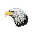 bald eagle head portrait from a splash vector image vector image