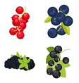 berries vector image