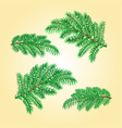 Christmas decorations spruce twigs vector image vector image