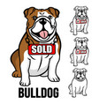 modern american bulldog and real estate logo vector image