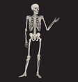human skeleton posing isolated over black vector image vector image