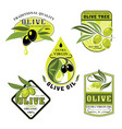 icons of olives and italian olive oil vector image vector image