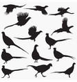 pheasant silhouettes vector image vector image