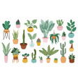 plant in pots home potted plants flower house vector image vector image