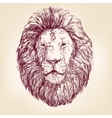 Lion hand drawn llustration realistic sketch vector image