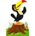 cartoon happy toucan on tree stump vector image vector image
