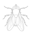 fly Musca domestica Insect a realistic fly vector image