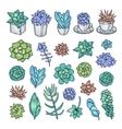 hand drawn set succulents pen graphic vector image vector image
