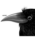portrait of a black raven vector image