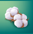 beautiful realistic cotton plant flowers isolated vector image vector image