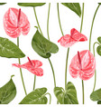 anthurium seamless floral pattern with pink vector image