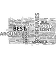 best perfumes text word cloud concept vector image vector image
