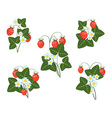 bushes of strawberries vector image vector image