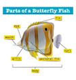 Diagram of different parts of fish vector image vector image