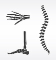 Parts of human skeleton vector image