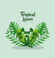 tropical leaves branch palm botanical card vector image vector image