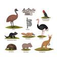 australia animals set in colorful silhouette vector image