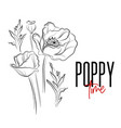 poppy flowers decorative print nature vector image