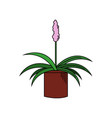beautiful plant with pink flower in pot vector image