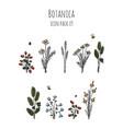 botanica - stylized nine items colored icon set vector image