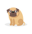 cute funny pug dog character pet dog cartoon vector image vector image