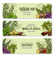 herb hot spice and food condiment sketch banner vector image vector image
